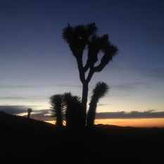 I made this tree the subject of the rest of my pictures. It looks more typical as a joshua tree and it was much nearer to my car (it was freezing at 5 am in the morning).